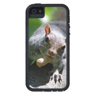 squirrel-26.jpg iPhone 5 cover