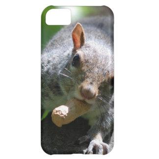 squirrel-26.jpg iPhone 5C cases