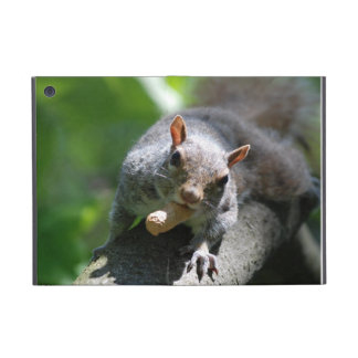 squirrel-26.jpg covers for iPad mini