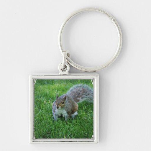 squirrel-33 keychains