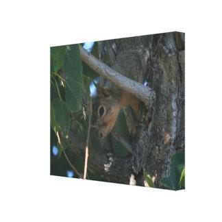 Squirrel 3 Canvas Print