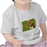 squirrel-50.jpg camisetas
