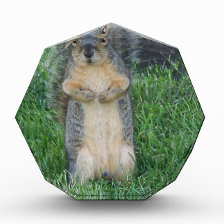 Squirrel Acrylic Award