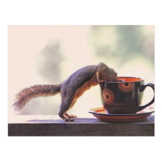 Squirrel and Coffee Cup Post Card
