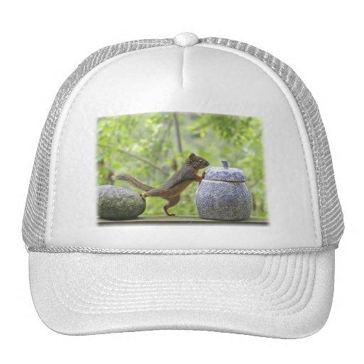 Squirrel and Cookie Jar Mesh Hat