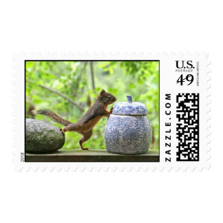 Squirrel and Cookie Jar Stamp