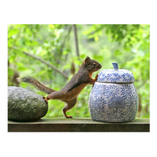 Squirrel and Cookie Jar Postcard