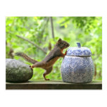 Squirrel and Cookie Jar Postcards