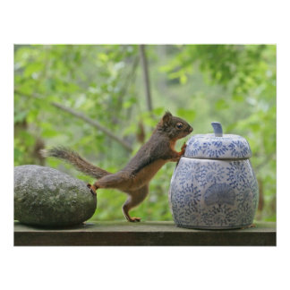 Squirrel and Cookie Jar Poster Print