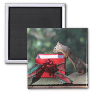 Squirrel and Open Present Fridge Magnet