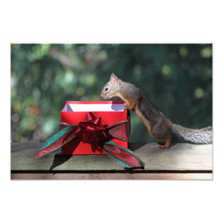 Squirrel and Open Present Photo Print