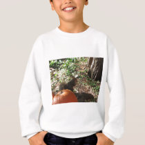 Squirrel and pumpkin sweatshirt