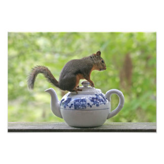 Squirrel and Teapot Photo