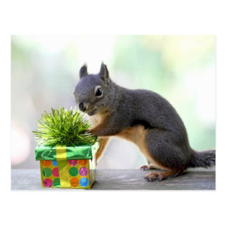 Squirrel and Wrapped Present Postcard