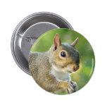 Squirrel Animal Button