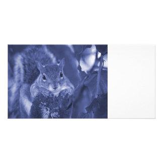 squirrel animal on log hanging out bluish customized photo card