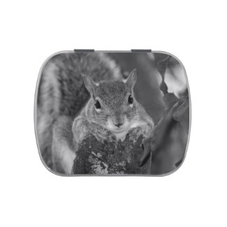 squirrel animal on log hanging out bw jelly belly candy tins