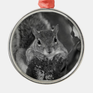 squirrel animal on log hanging out bw christmas tree ornaments