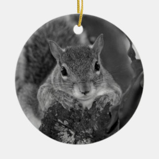 squirrel animal on log hanging out bw ornaments