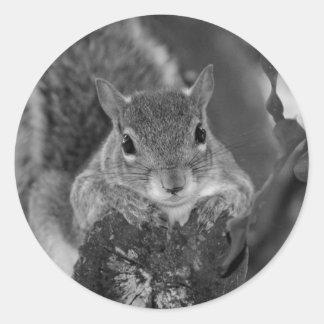 squirrel animal on log hanging out bw round sticker