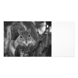 squirrel animal on log hanging out bw personalized photo card
