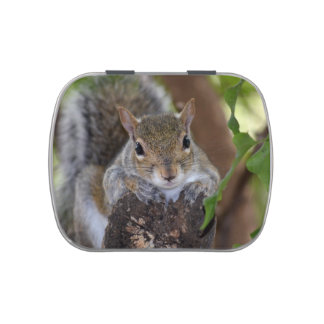 squirrel animal on log hanging out colour candy tins