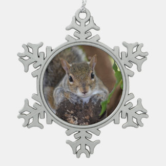 squirrel animal on log hanging out colour ornaments