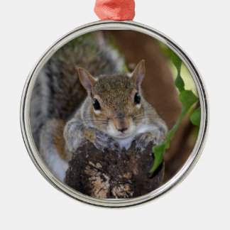 squirrel animal on log hanging out colour ornament