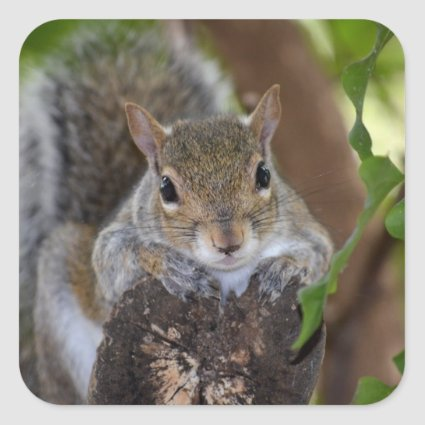 squirrel animal on log hanging out colour square sticker