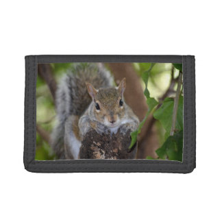 squirrel animal on log hanging out colour trifold wallet