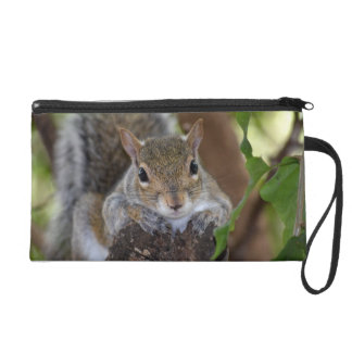 squirrel animal on log hanging out colour wristlet purse