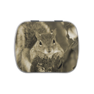 squirrel animal on log hanging out sepia jelly belly tin