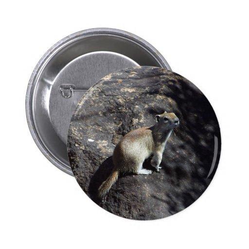 Squirrel Animal Pin