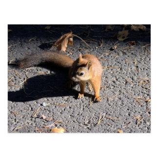 Squirrel at park postcard