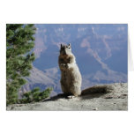 Squirrel at the Grand Canyon Greeting Cards