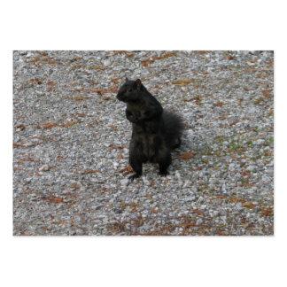 Squirrel Attitude Business Cards