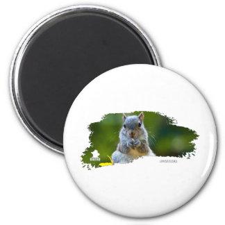 Squirrel Baby 01 2 Inch Round Magnet