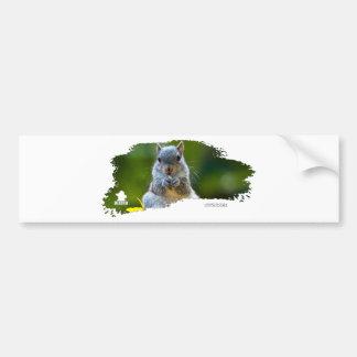 Squirrel Baby 01 Bumper Sticker