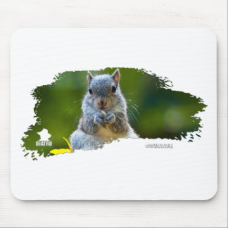 Squirrel Baby 01 Mouse Pad