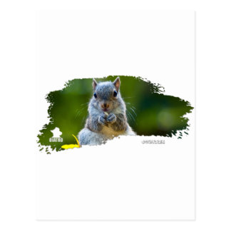 Squirrel Baby 01 Postcard