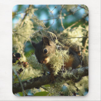 Squirrel Baby 2009 Mouse Pad