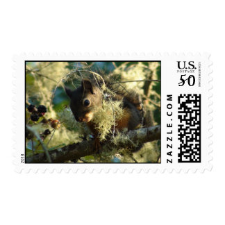 Squirrel Baby 2009 Postage
