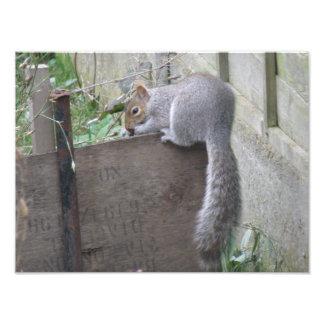 Squirrel Balancing Act Photo Print