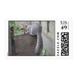 Squirrel Balancing Atc Postage Stamp