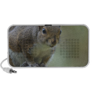 Squirrel Balancing Travelling Speakers