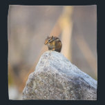 """Squirrel Bandana<br><div class=""""desc"""">Squirrels are nimble,  bushy-tailed rodents found all over the world. They belong to the Sciuridae family,  which includes prairie dogs,  chipmunks and marmots.</div>"""