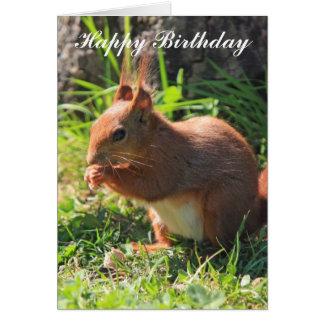 Squirrel beautiful portrait happy birthday card