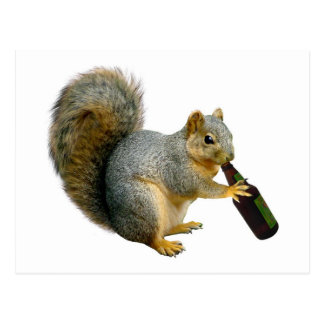 Squirrel Beer Postcard