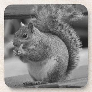 Squirrel Beverage Coaster