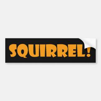 Squirrel Bumper Sticker